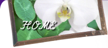 HOME 胡蝶蘭 通販 花・植物のネット販売 姫路市 ひめじ園芸総合センター