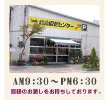 胡蝶蘭 通販 花・植物のネット販売 姫路市 ひめじ園芸総合センター